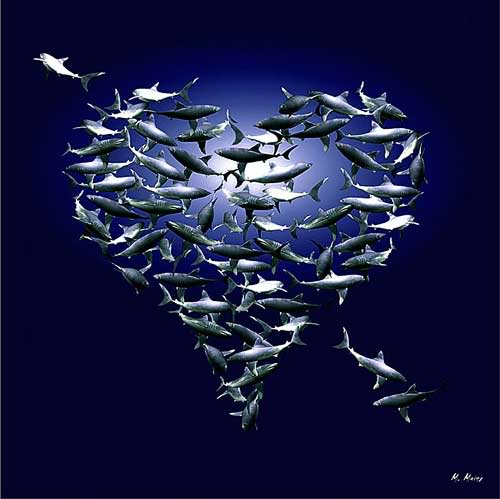 Family life and relationship there are plenty more fish for More fish in the sea