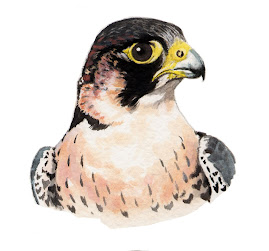Halcn peregrino