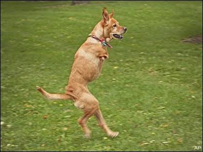Dog Walks Around Doncaster