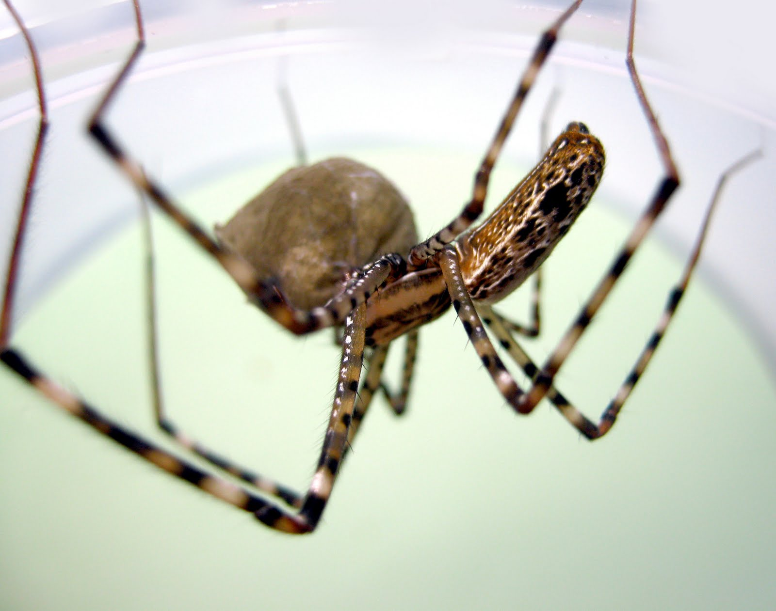 Tooth cave spider pictures Awesome Pictures - Infographics - Free Wallpapers