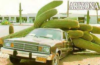 The # 5million, 751 thousand, 688th thing to watch while driving...falling cactus'