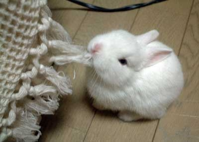 [cute-little-animals-03.jpg]