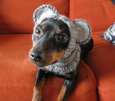 dog pattern to humiliate the dog by amoena di craft knitting