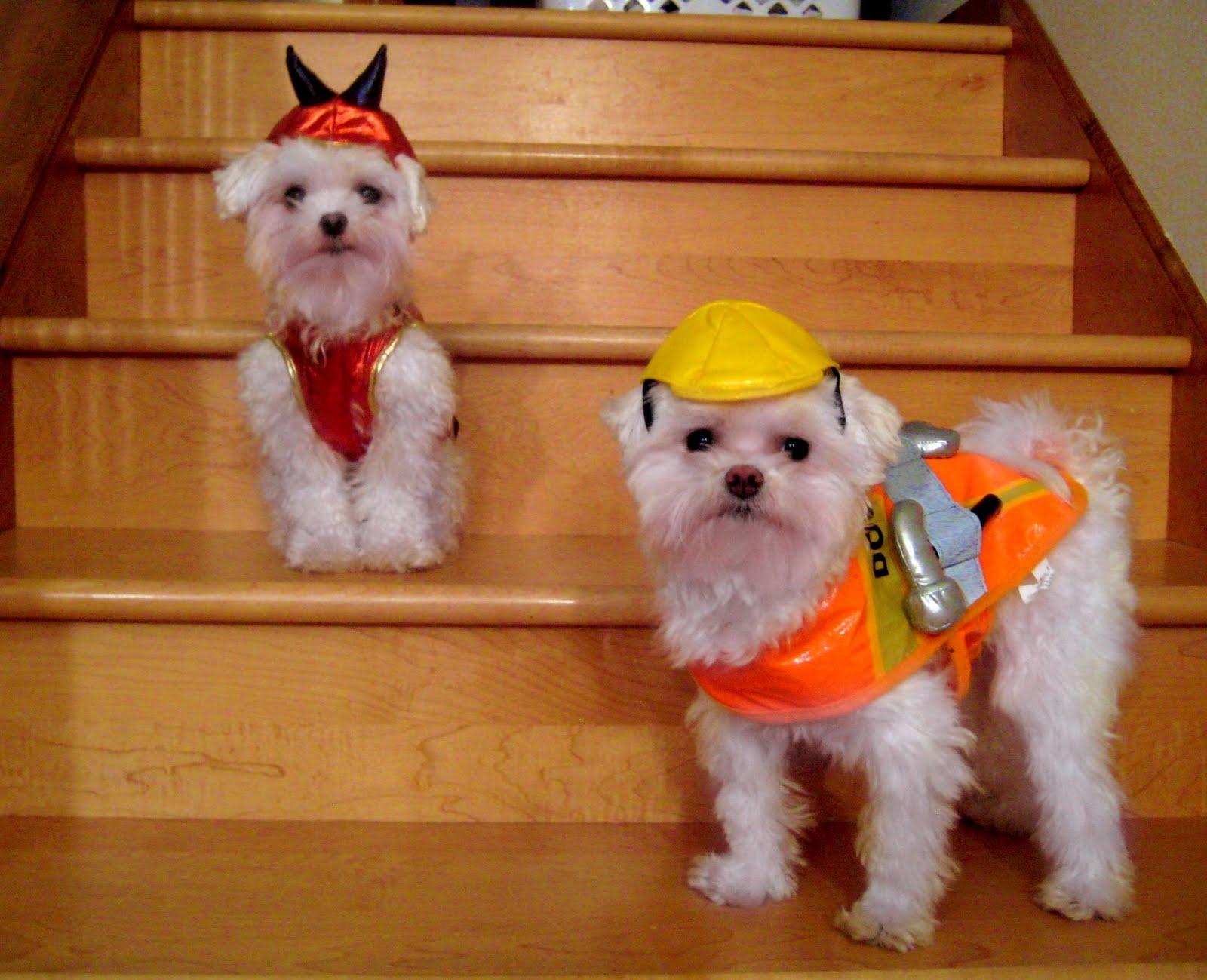 love jenny xoxo: Charlie and Sawyer's Halloween Costumes