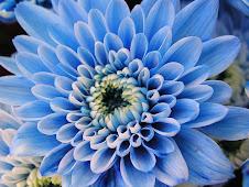 Blue Scallops