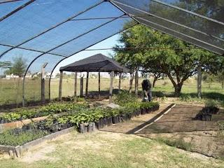 Construccion de viveros for Estructuras para viveros plantas
