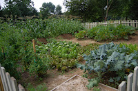 2009 Vegetable Garden