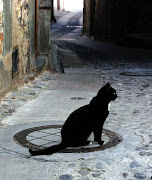 Black Cat black cat liipa ifbp