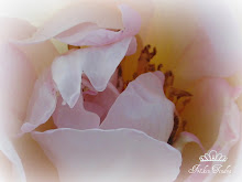 Du vackra ros!