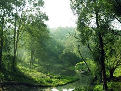 Nature Stills