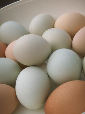 فوائد عن البيض Eggs
