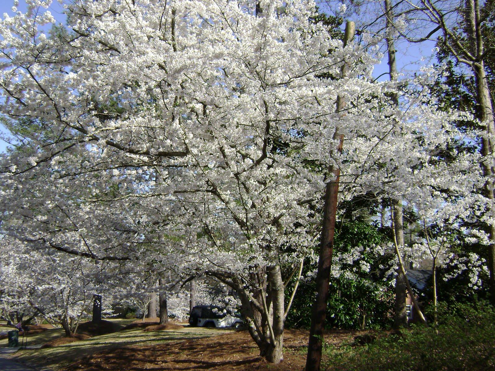 Cherry Blossom Festival Arts And Crafts Macon Ga