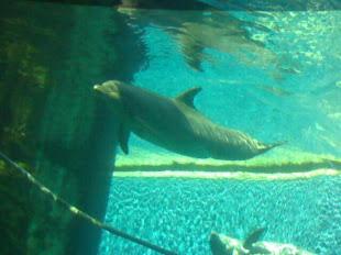 I miei adorati delfini!