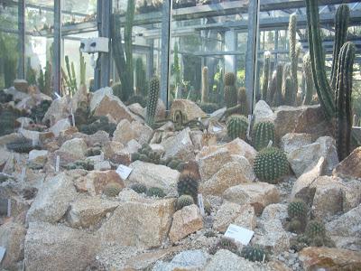 Cactus e piante grasse serra delle piante grasse orto for Serra piante grasse
