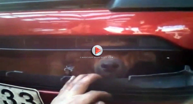 Untitled 2 Dog Found Trapped Inside Cars Bumper After Being Hit on the Highway Photos