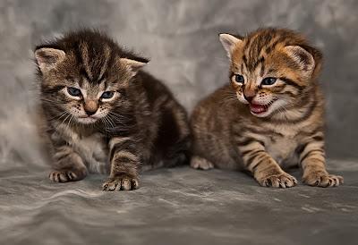 Funny cute cat photos