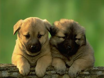 Funny pair dogs animals stills
