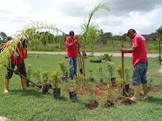 Fundaimagen realiza siembra de plantas en la universidad