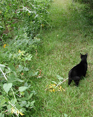 The Stalking Garden Helper