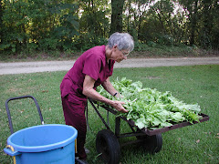 Yvonne washes the lettuce....