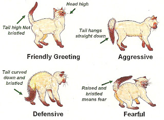 Cat Tail Sitting Positions And What They Mean