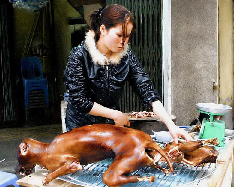 NOBEL VỀ NÓN BẢO HIỂM Dog-meat