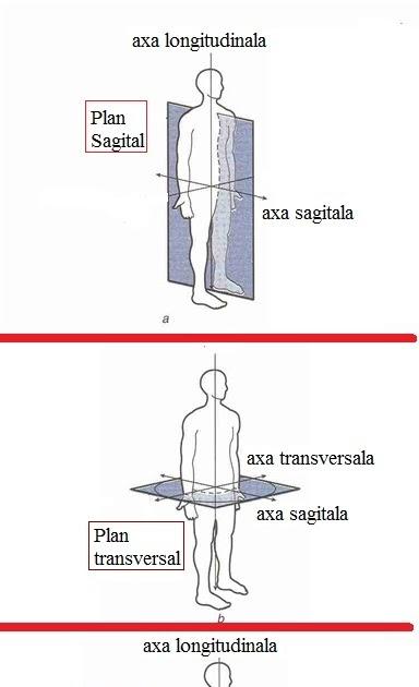 Anatomie corp uman 2466069 - togelmaya.info