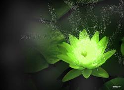 La flor de magia