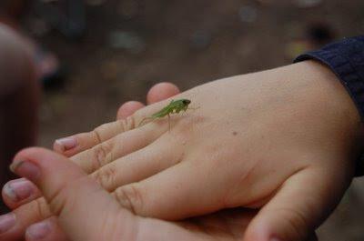 Peregrine the mantis whisperer
