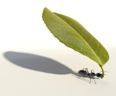 Working ants - photo#25
