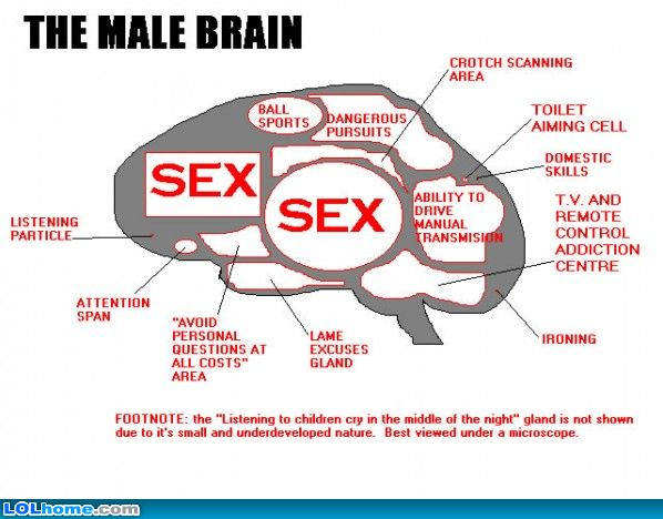 love sex and the male brain