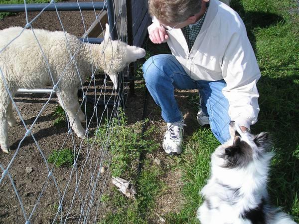 [sheepencounter4.jpg]