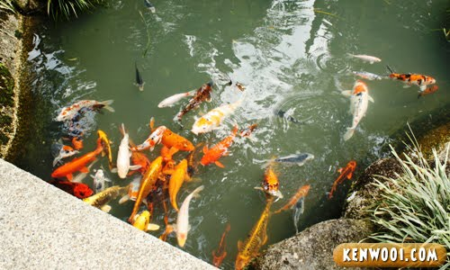 japanse village koi fish pond