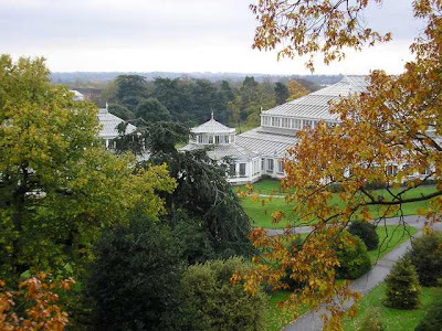 treetop walkway kew gardens