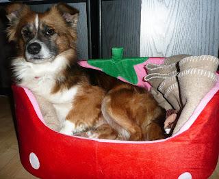 Adoptati un animal abandonat