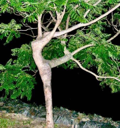 ... aneh, difoto kok bentuknya seperti penari balet, benar benar aneh