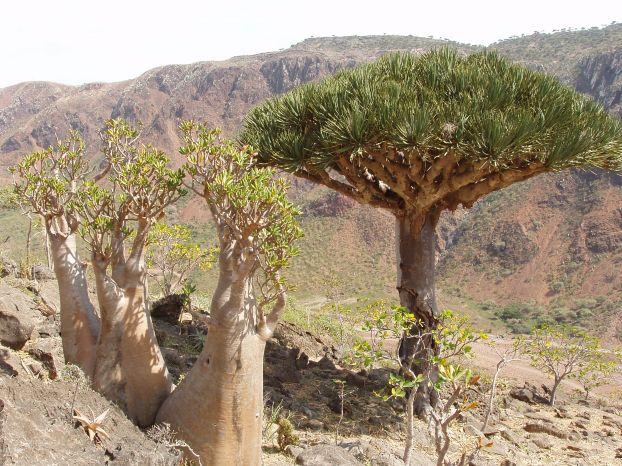 Socotra Island 18