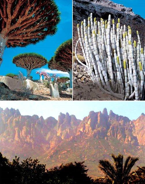 Socotra, el lugar más extraño de la Tierra
