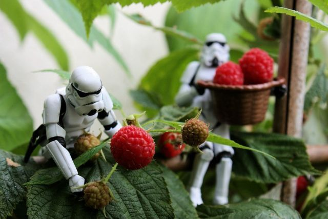 photos cool Stormtroopers_67