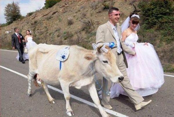 صور عرسان مضحكة وتووحفة ..// funny_wedding_pictur