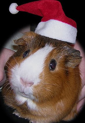 Santa Hat Seen On www.coolpicturegallery.us