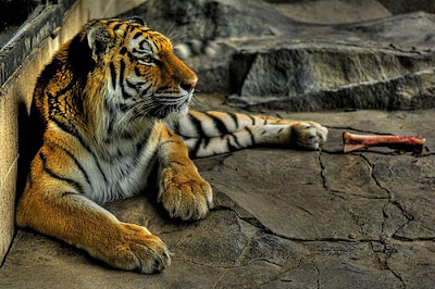 60 Stunning HDR Photos of Animals