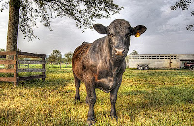 Stunning HDR Photo of  Animal Seen On www.coolpicturegallery.net