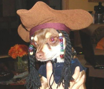 Crazy Halloween Costume for Dog Seen On www.coolpicturegallery.us