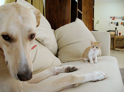 Cat And Dog Photobombing Each Other Seen On  www.coolpicturegallery.us