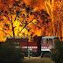 Forest Fires Hit Victoria, Australia