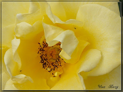 жёлтый цветок