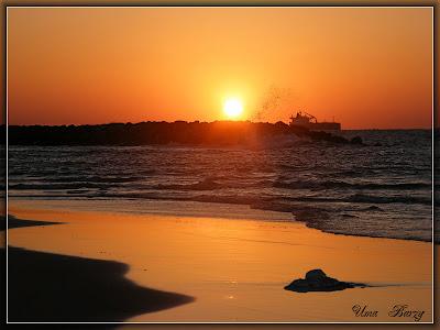 медуза, пляж, море, закат