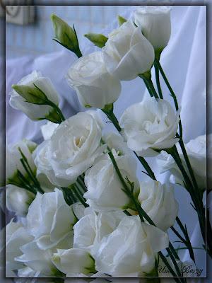 фото цветы