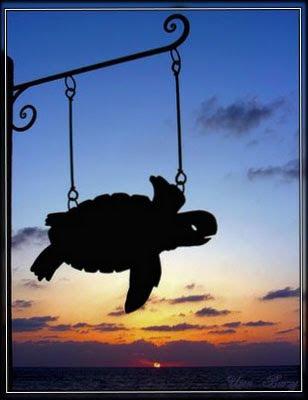 черепаха, вывеска, табличка
